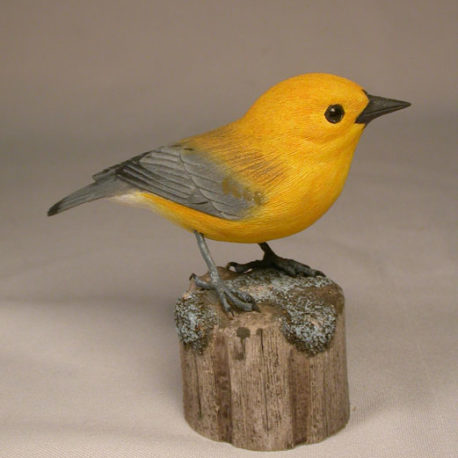 prothonotary-warbler2