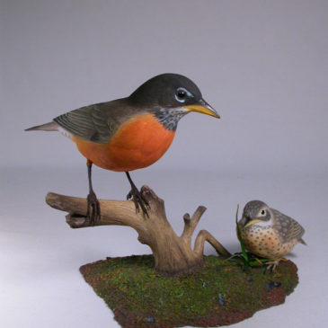Life Size American Robin & Baby