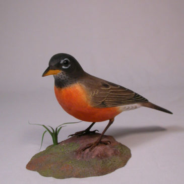 Life Size American Robin