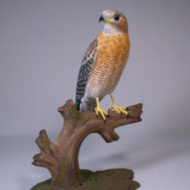 10″ Red-shouldered Hawk