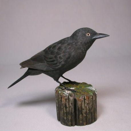 rustyblackbird1