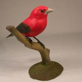 Scarlet Tanager #2