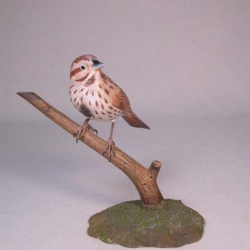 Song Sparrow #1