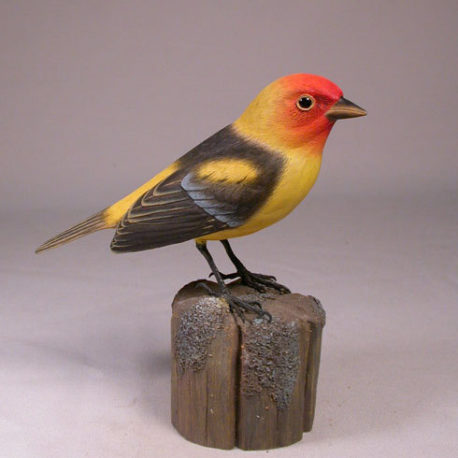 tanager-western1