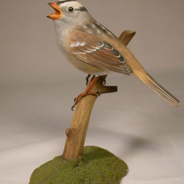 White-crowned Sparrow #2 on branch