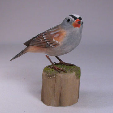 White-crowned Sparrow #1