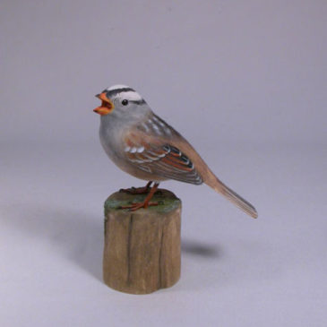 White-crowned Sparrow #3