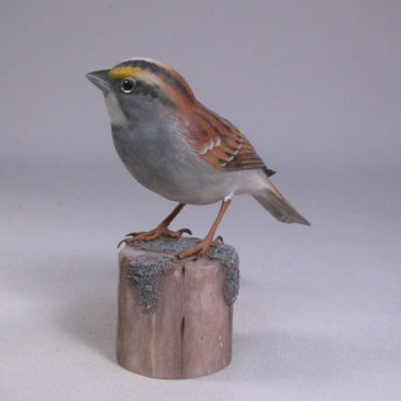 White-throated Sparrow #1