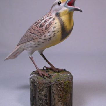 Life Size Western Meadowlark #1