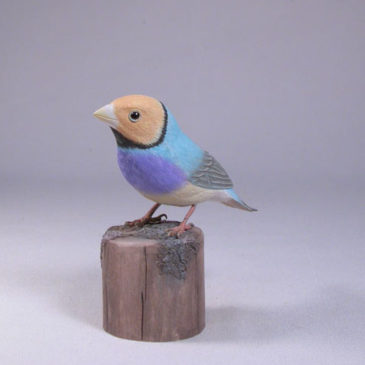Gouldian Finch Yellow Head (lilac breast)