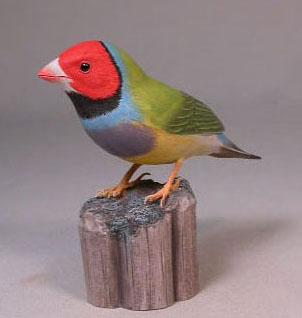 Gouldian Finch (red-head)