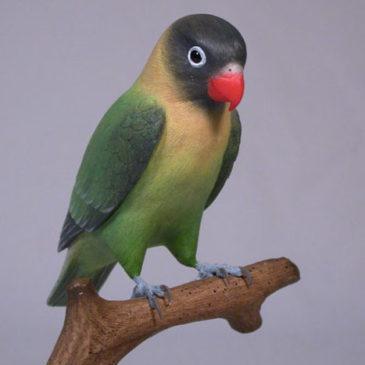 5″ Masked Lovebird (A)