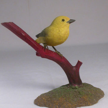 Yellow Warbler (Female) #2
