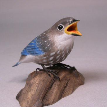 Baby Eastern Bluebird #2