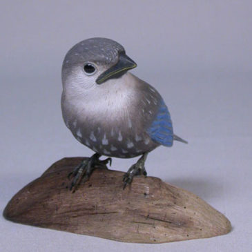 Baby Eastern Bluebird #1