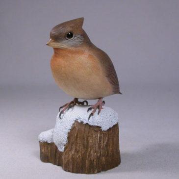 Baby Northern Cardinal #2