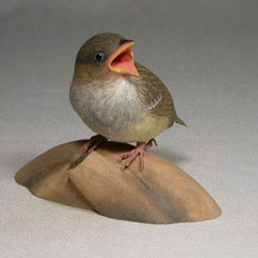 Baby House Sparrow #3