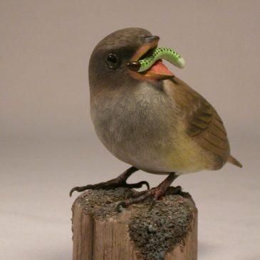 Baby House Sparrow #2