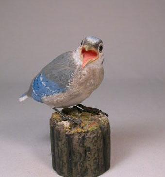 Baby Blue Jay #2