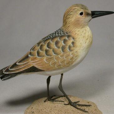Baird Sandpiper