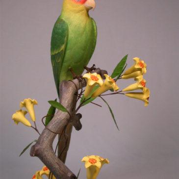 11″ Carolina Parakeets