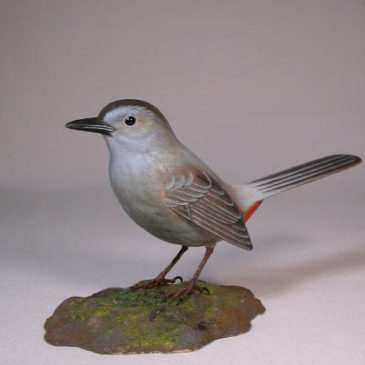 Gray Catbird #2