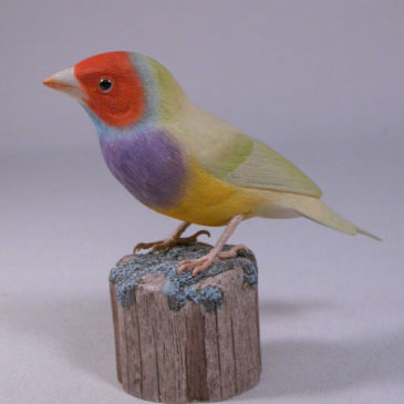 Gouldian Finch Green Back