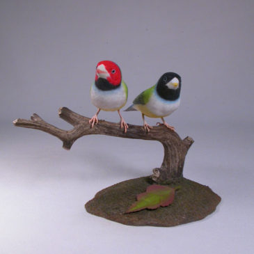 Gouldian Finches Pair #3