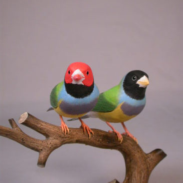 Gouldian Finches Pair #4