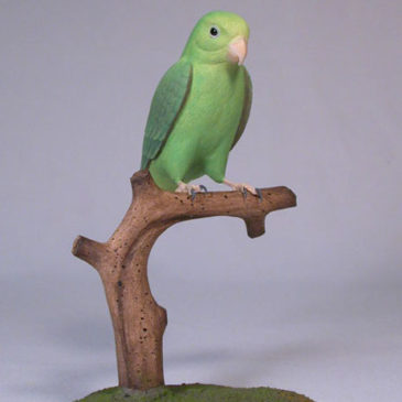 5″Green-rumped Parrotlet