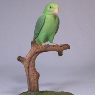 5″ Green-rumped Parrotlet