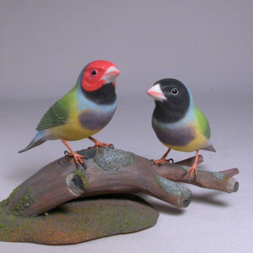 Gouldian Finches Pair #2