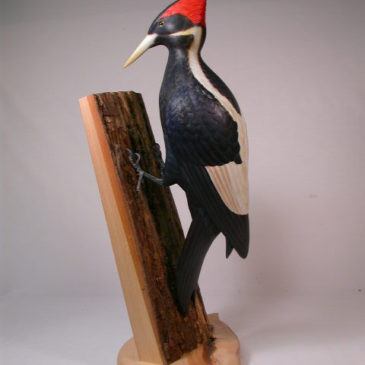 Life Size Ivory-billed Woodpecker