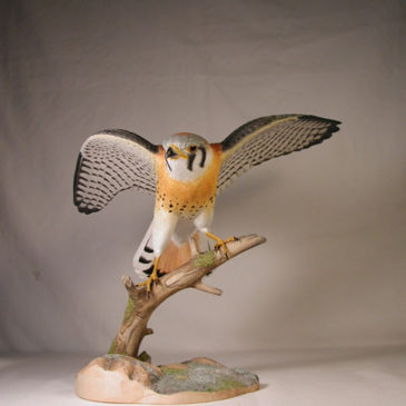 Open-winged American Kestrel