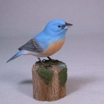 Lazuli Bunting on branch #1