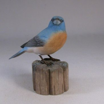 Lazuli Bunting on branch #3
