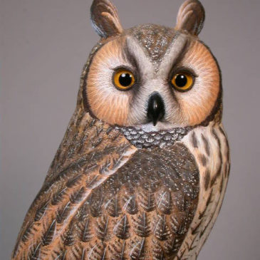 Life Sized 15″ Long-eared Owl