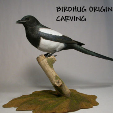 Life Sized Black-billed Magpie