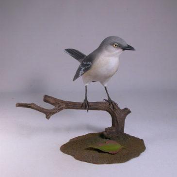 Northern Mockingbird #2