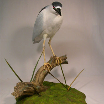 LifeSize Black-crowned Night Heron