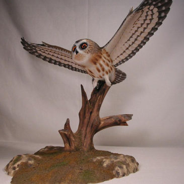 Life Sized Open-winged Saw-whet Owl