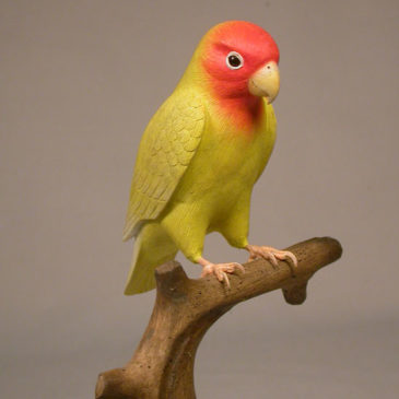 Peach-faced Lovebird #2