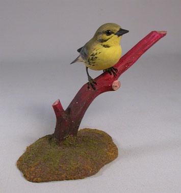 Prairie Warbler #2