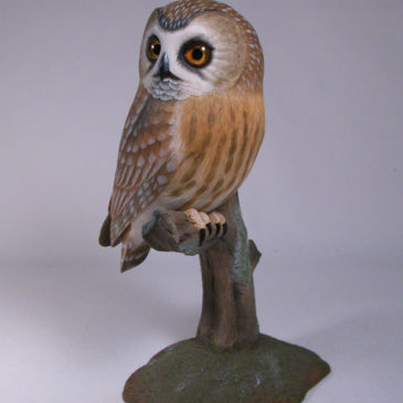 Life sized Saw-whet Owl