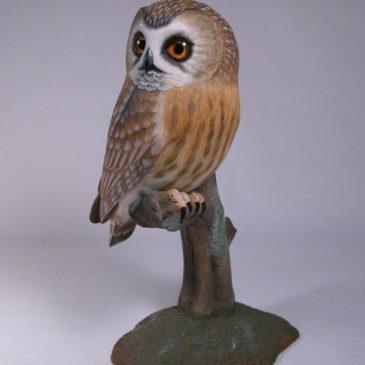 Life sized Saw-whet Owl