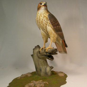 Life Sized Red-tailed Hawk