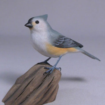 Tufted Titmouse #5