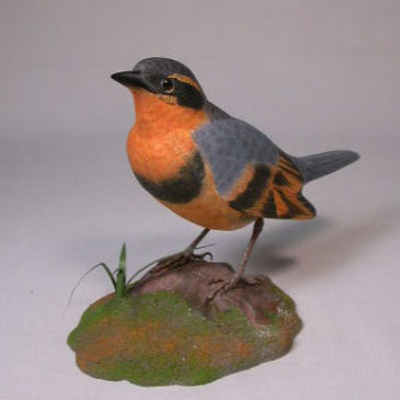 Life Size Varied Thrush