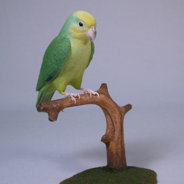 5″Yellow-faced Parrotlet #1