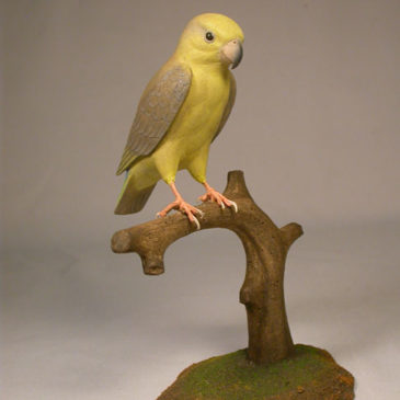 5″Yellow-faced Parrotlet #2